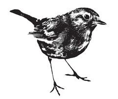 Stamp - Robin